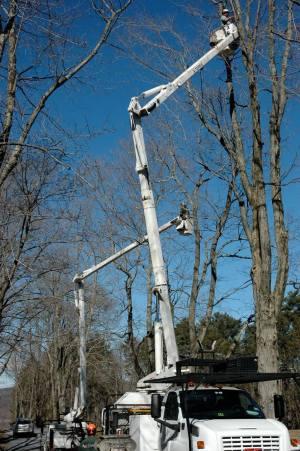 diy pruning tree pruning