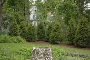 plant evergreen trees in spring and fall
