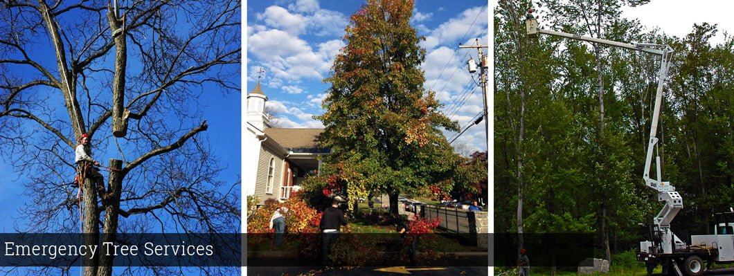 emergency tree removal services, tree services