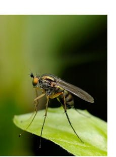 tree diseases and tick management and mosquito management