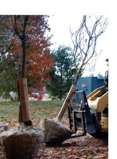 tree planting and tree transplanting service