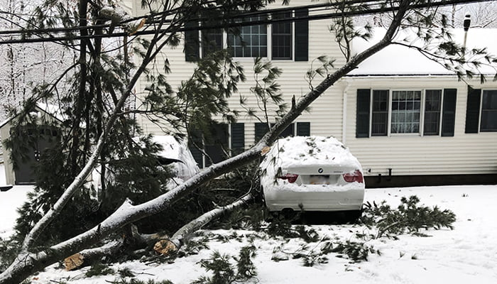 Bombogenesis: How This Will Impact Your Trees