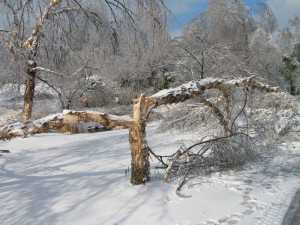 winter storm stella tree damage