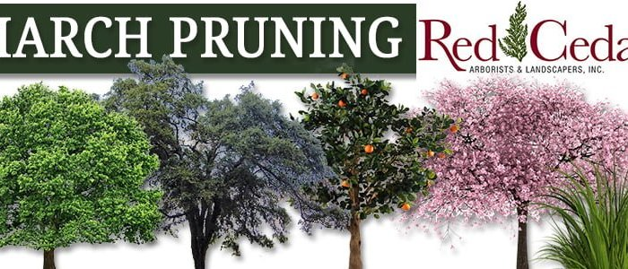 What trees should I prune in March?