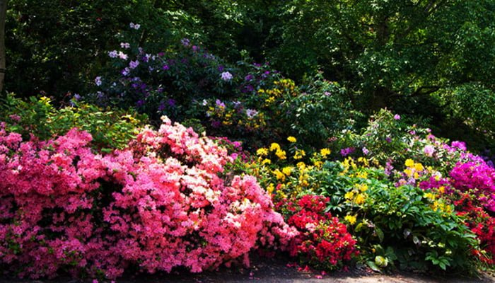 Winter Is The Ideal Season To Plan Spring Landscaping