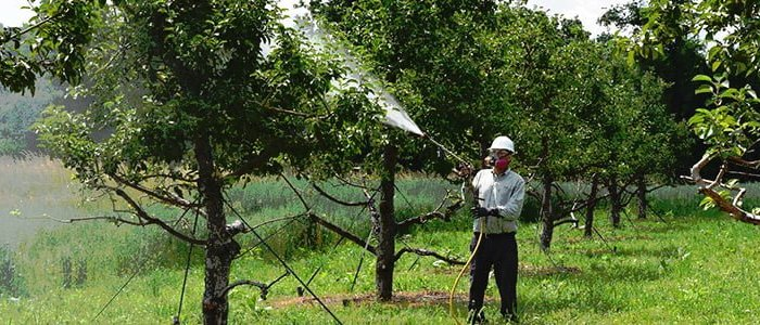 Fertility Management & Nutrition For Your Trees