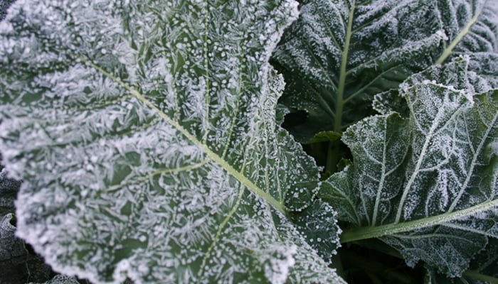 Protecting your landscape from frost