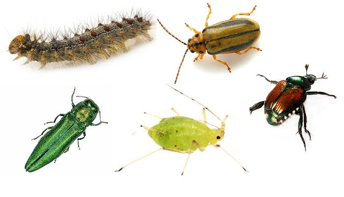 Insect Identification: Tree Pests To Be Aware Of