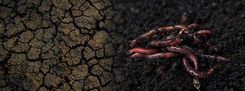 healthy soil red cedar