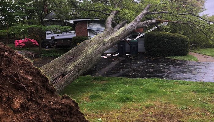 Avoid Tree Damage: Signs Your Tree May Fall