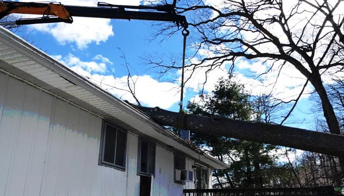 Top 6 Reasons For Tree Removal