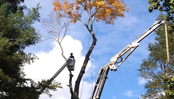 Common Tree Trimming Mistakes Homeowners Make