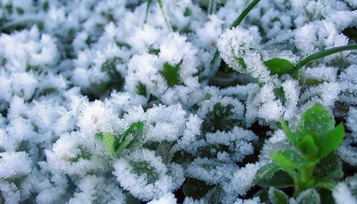 Winter Plants: Are You Watering Plants In Winter?