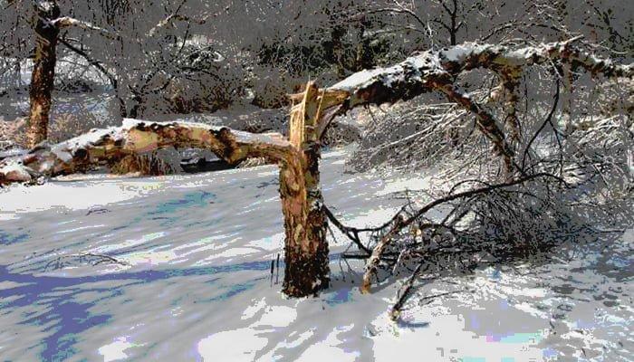 tree winter prep