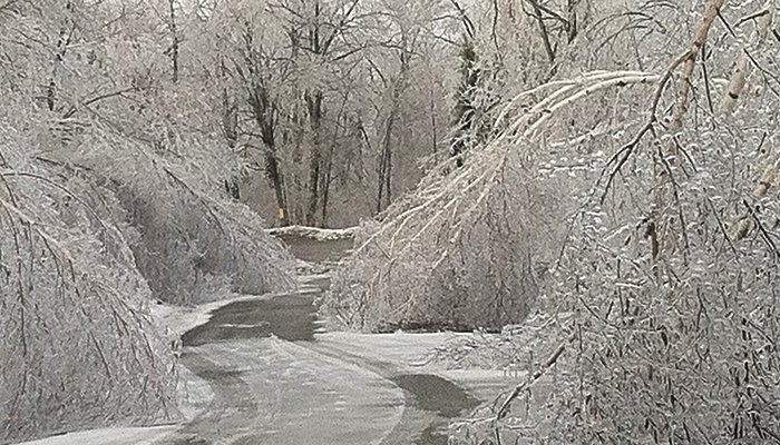 Common Tree Problems You May See This Winter
