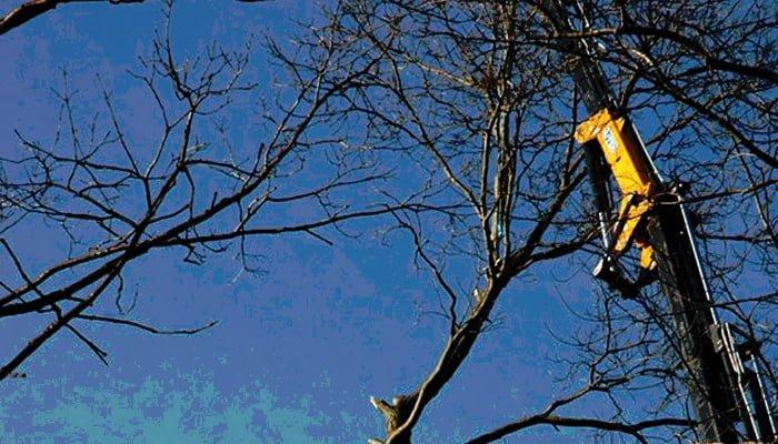 Benefits Of Winter Tree Work