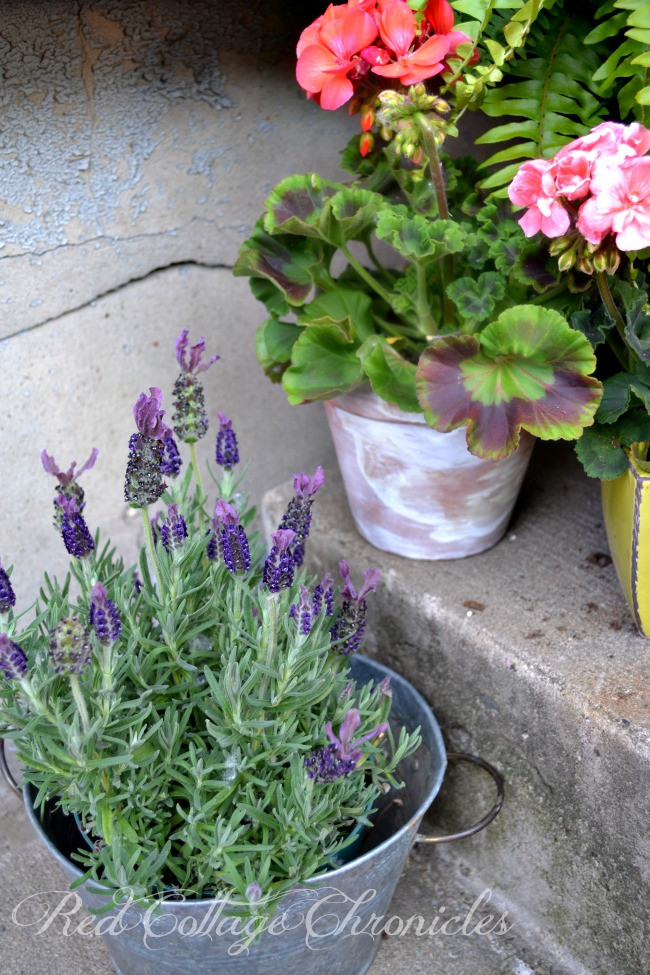 How to Age Terracotta Pots from Red Cottage Chronicles