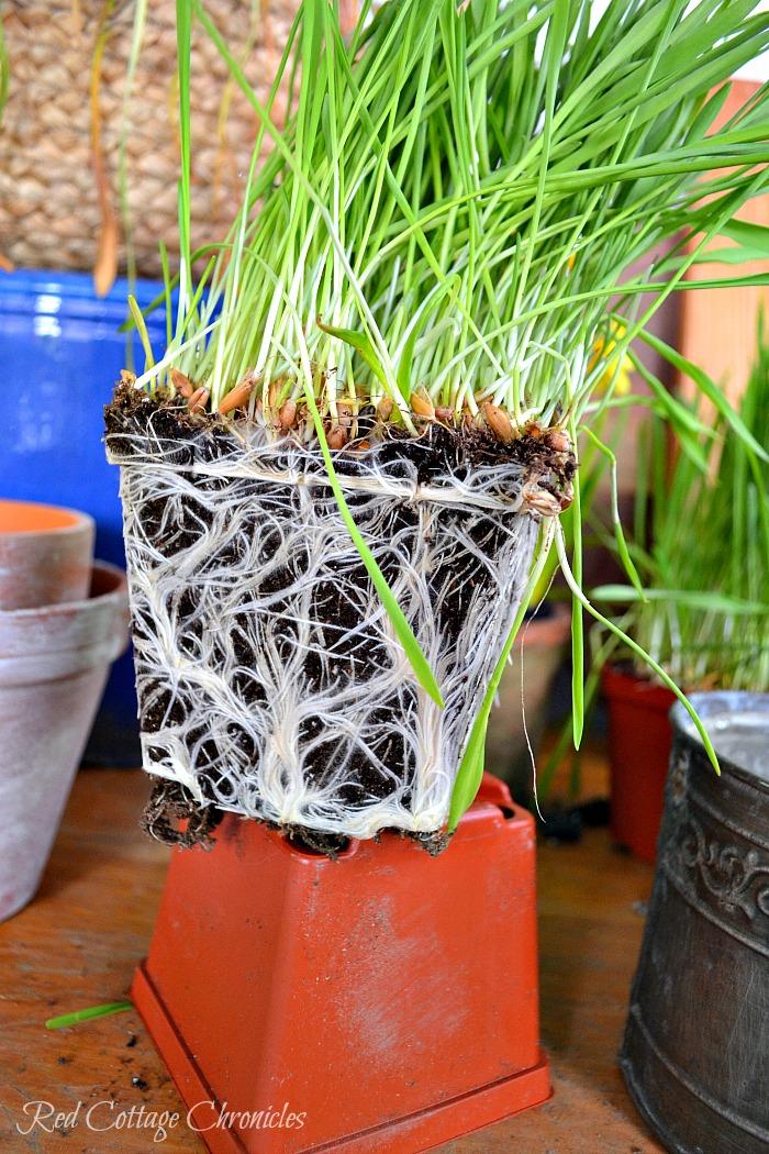 Easy DIY Spring Planter