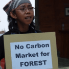 World Bank admits We will make mistakes on REDD