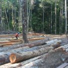 World Bank bulldozes ahead with REDD in Guyana and Panama