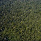 Some answers from UN-REDD in Papua New Guinea