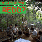 What to do with REDD? A manual for indigenous trainers