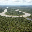 REDD projects in Papua New Guinea 'Legally untenable'. PHOTO: Greenpeace