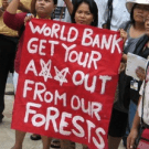 NGO letter to Forest Carbon Partnership Facility highlights Emerging Accountability Gap