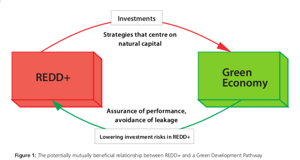 REDD and the Green Economy