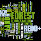 REDD in the news: 25 June - 1 July 2012