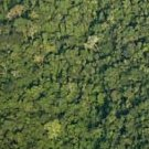 """""""In the field of international climate policy and collaboration, REDD+ is a success"""" 
