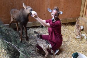 A mask maker protects deer at a central Alberta nature center – Red Deer Advocate