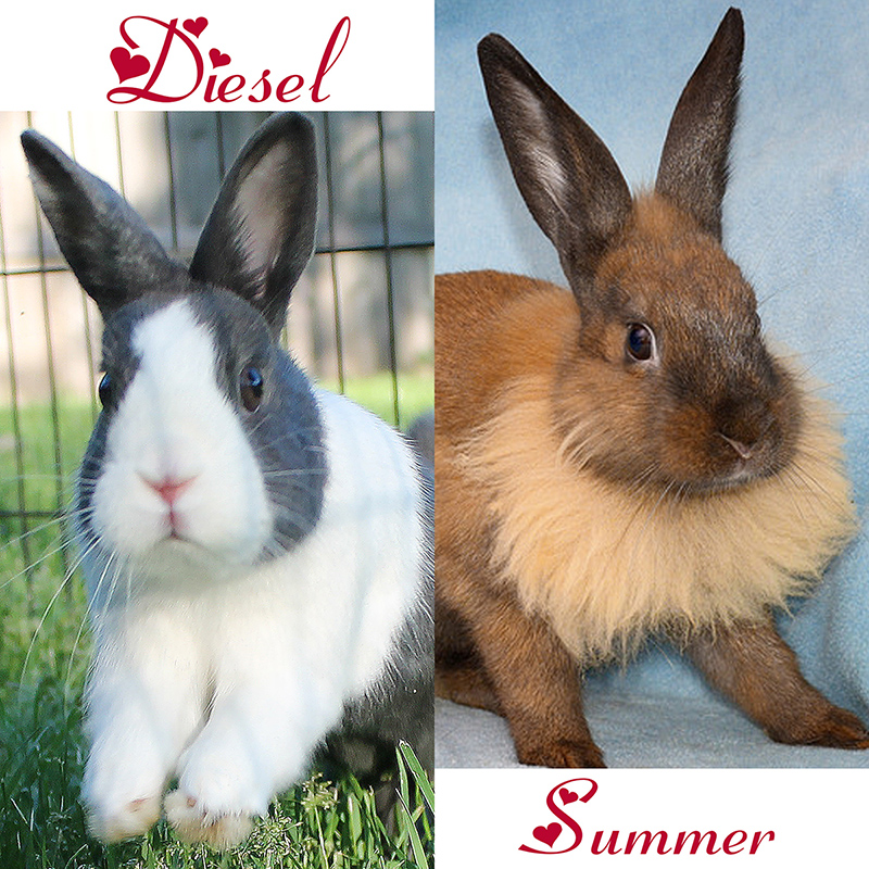 Image of: Chicago Wags Pet Adoption Chicago Animal Shelter Adopt And Rescue Cats Rabbits Dogs Red Door