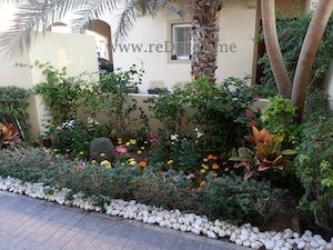 organising front garden