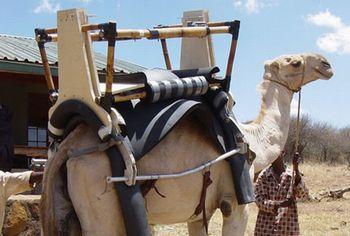 Camel Powered Mobile Health Clinics – Camels and solar fridges help Kenya's nomads