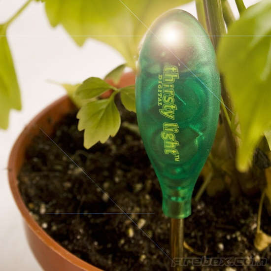Thirsty Light reminds to to water your dying plants