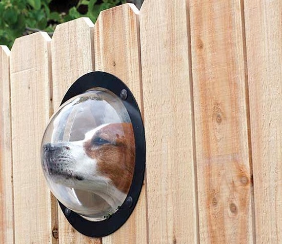 Pet Peek gives your pup a window to the world