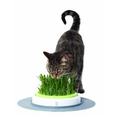 Catit Senses Grass Garden gives your cat a taste of the wild side