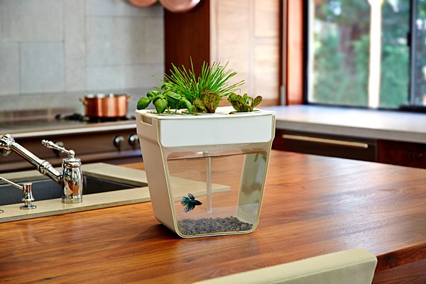 Aquaponics Fish Garden – It's the circle of life