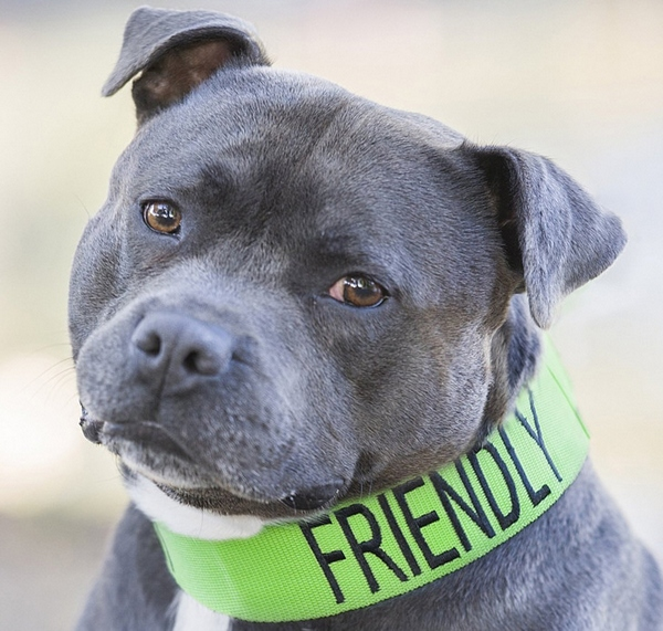 Friendly Dog Collars – let the world know about your pet's character instantly