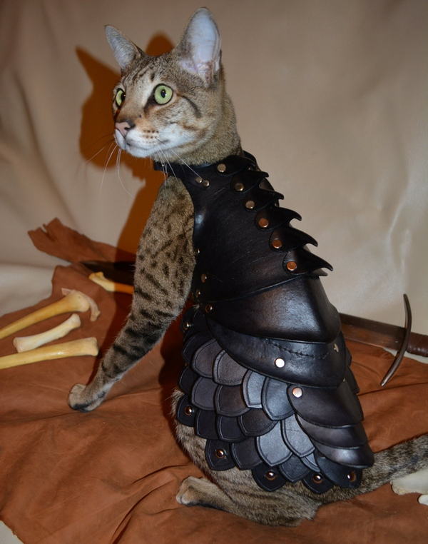 Cat Battle Armor – protect your moggy and profit?