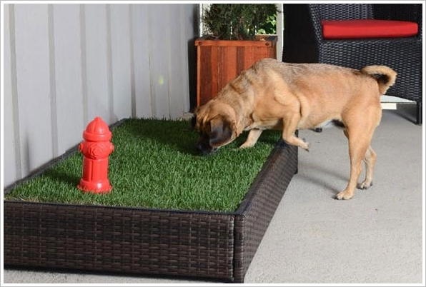 Porch Potty – the first automated dog litter box