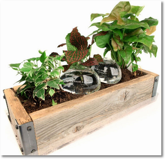 Water From A Stone – looks after your plants while you vacation hearty