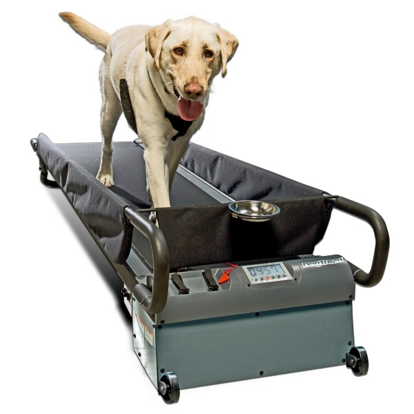 PetZen DogTread Dog Treadmill – take your dog for a walk without braving the weather