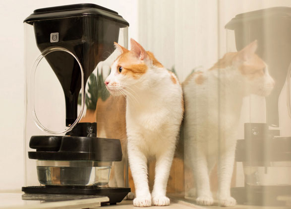 Bistro – the ultimate face recognition food bowl for crazy cat people