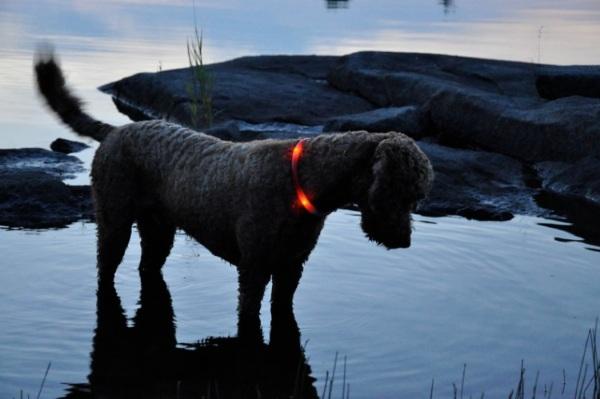 Glowdoggie – a glow in the dark collar for rural living