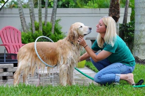 Woof Washer 360 – an easy solution for washing your dog