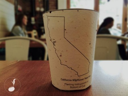 Biodegradable coffee cups that give you seeds to plant trees too!