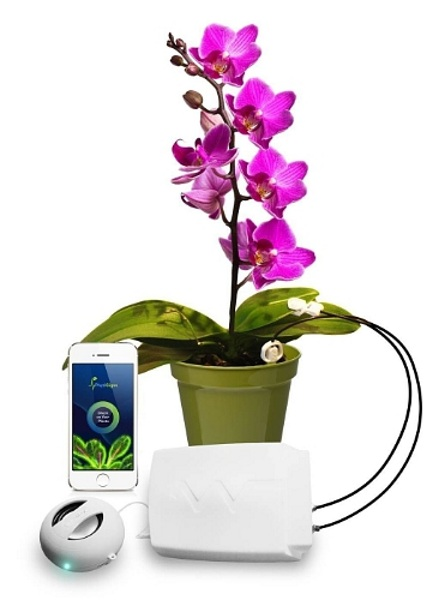 Phytl Signs EXPLORER – this device lets you see what your plants think about