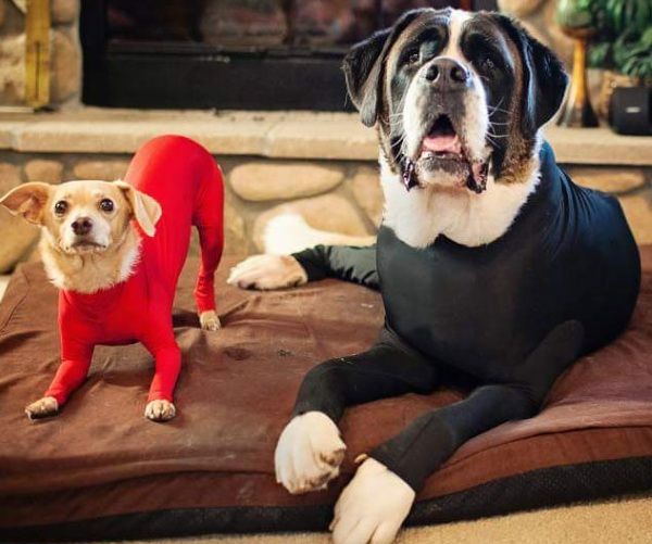 Shed Defender – keep your dog from decorating your house with fur
